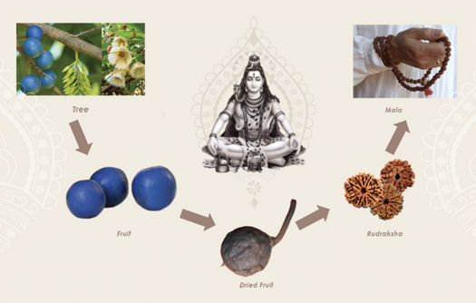 The importance of Rudaksha beads
